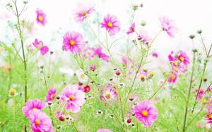 Wildflowers Wallpapers 3